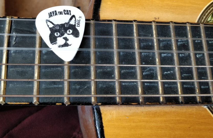 Jaya the cat - Karl's cat plectrum